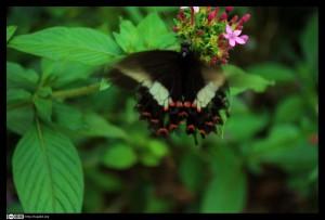 El aleteo de una mariposa...